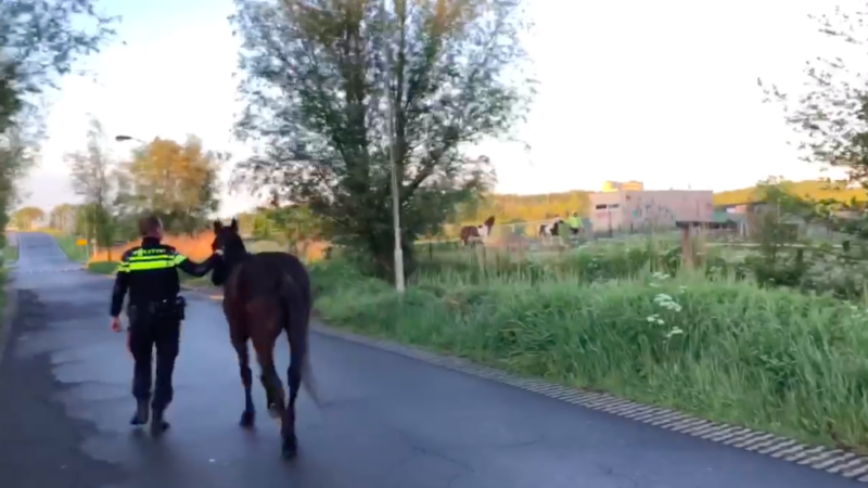 Politie vangt drie loslopende paarden