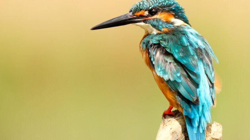 Natuurontwikkeling in Nieuw-Lekkerland met 'Het Ijsvogeltje'