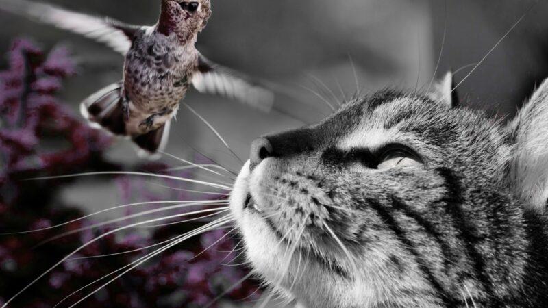 Loslopende katten en hun baasjes voor de rechter